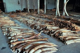Wildlife Crime & Trade